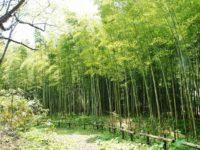 松前町にある北限の竹林「孟宋竹林」!北海道ではかなりレアな規模の大きな竹林は一見の価値あり!
