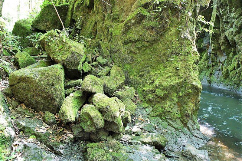 岩にビッシリ張りついたコケ 樽前ガロー