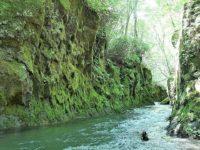 苔が広がる幻想的な空間「樽前ガロー」!樽前山から流れた水が作り出す緑の渓谷!