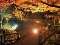 観光名所函館市の紅葉ライトアップ!「香雪園」は北海道で唯一の国指定文化財庭園!