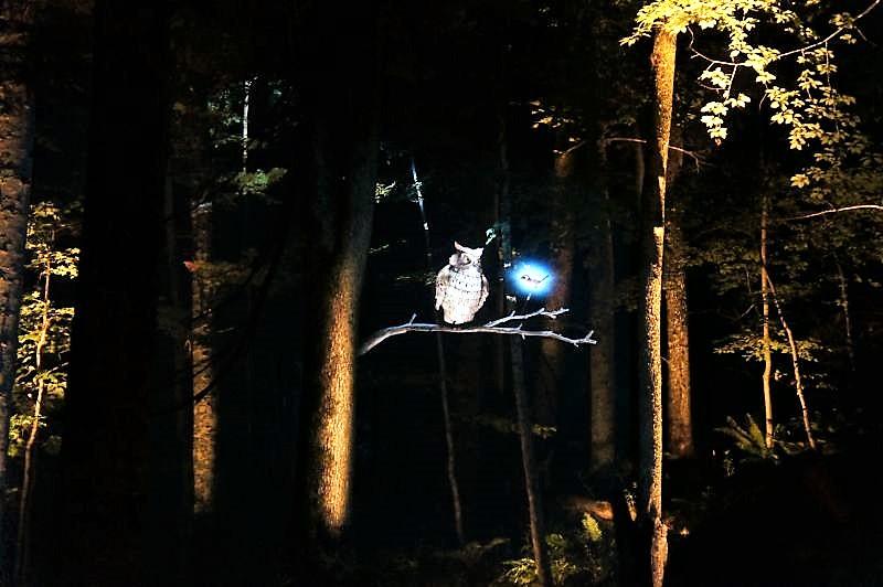 KAMUY LUMINA(カムイルミナ)/阿寒湖 フクロウとカケスによる物語