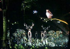 阿寒の森で行われる体験型ナイトウォーク「カムイルミナ」!アイヌに伝わる伝説を体で感じよう!
