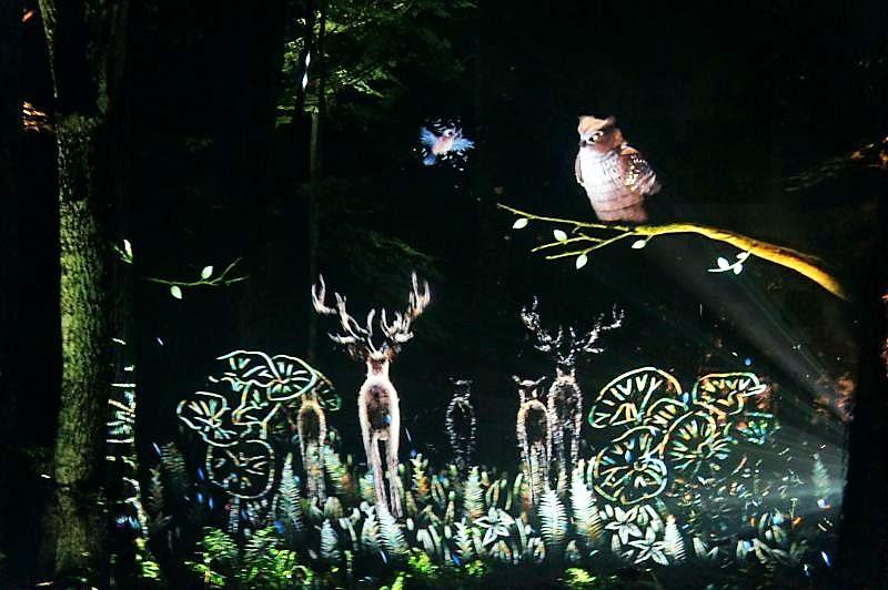 KAMUY LUMINA(カムイルミナ)/阿寒湖 森の木々をスクリーンにした魅力的な映像の数々
