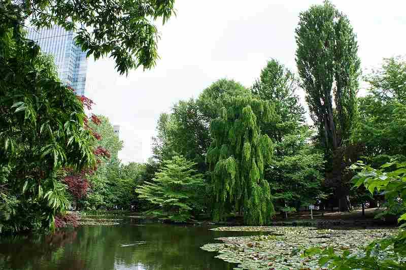 池の広がる中庭も魅力的な道庁赤れんが