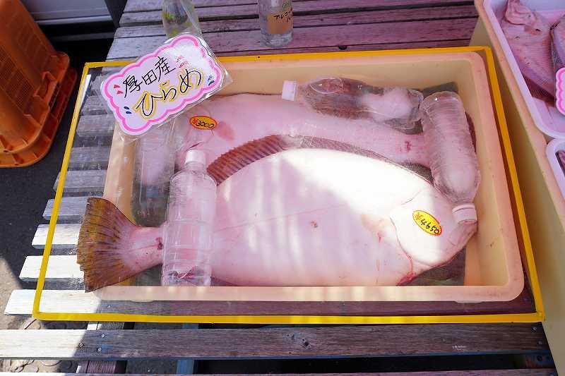 厚田港朝市では巨大なヒラメも3000円~で販売されていました