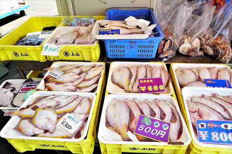 厚田港朝市では大きな 真ガレイ でも1匹100円位から販売しています