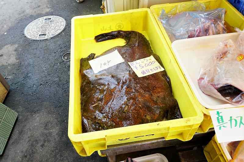 厚田港朝市では特大のアンコウも売っていました