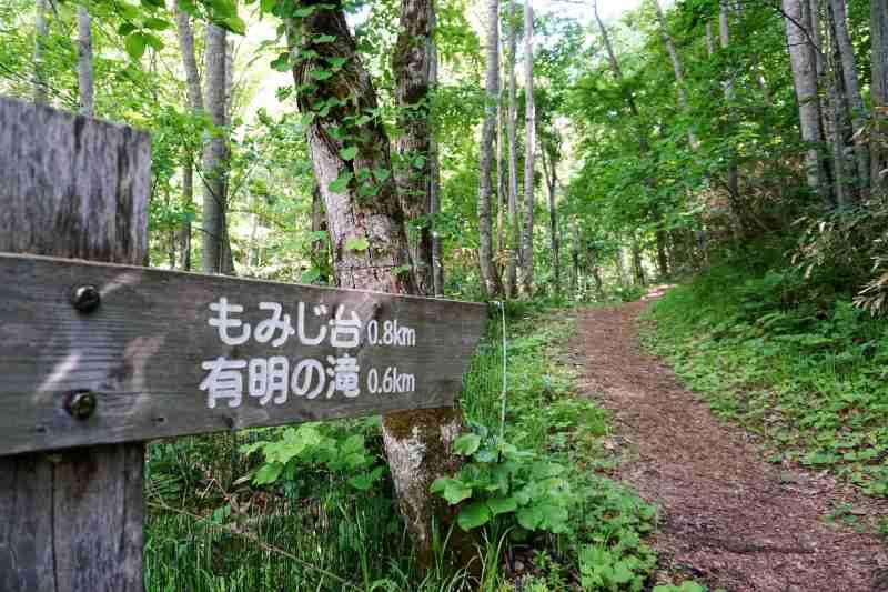有明の滝へ続く散策路
