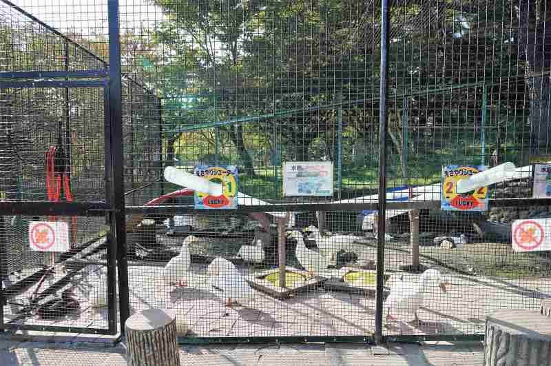 「栗山公園」の水鳥たち