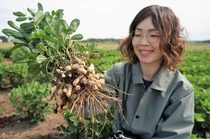 「落花生」の収穫