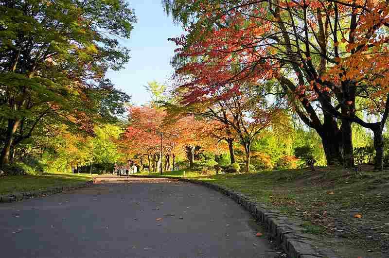 紅葉した木がキレイな中島公園の園内の様子