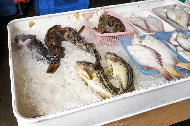 浜益ふるさと市場 新鮮な魚たち