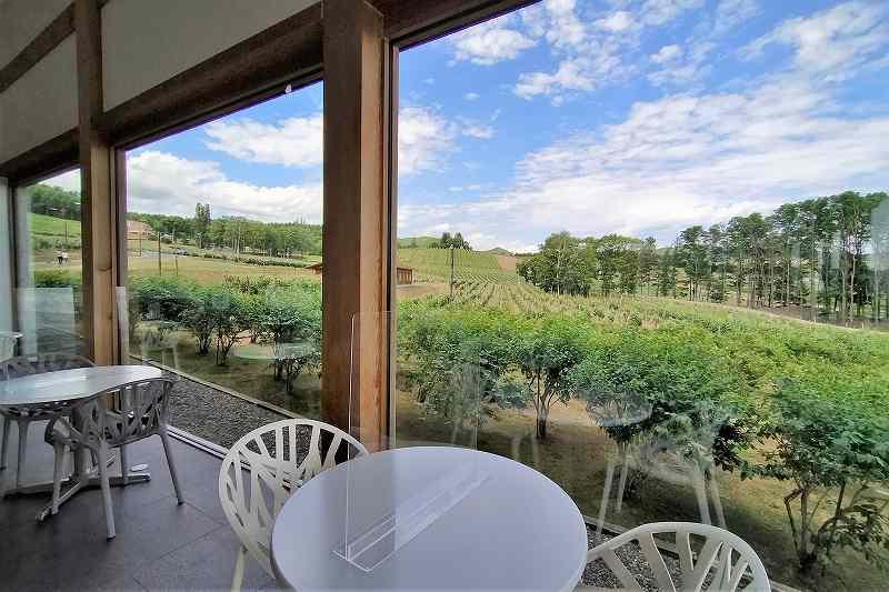 カフェの窓から見えるブドウ畑と青空