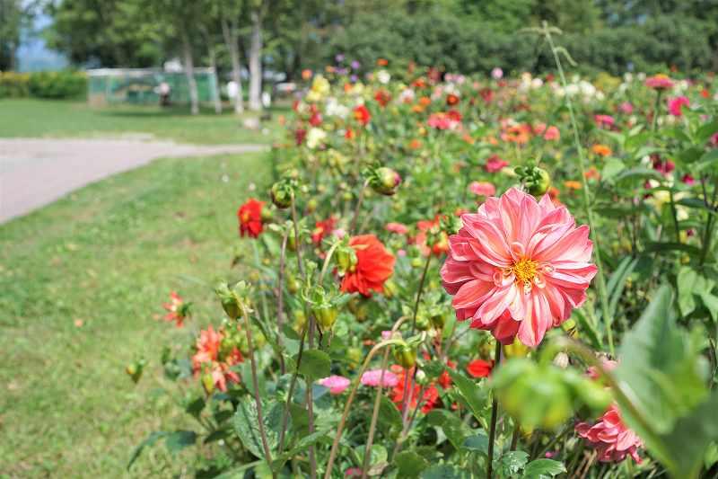 カラフルなお花が一面に咲いている