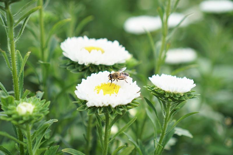 白いお花に蜂がとまっている